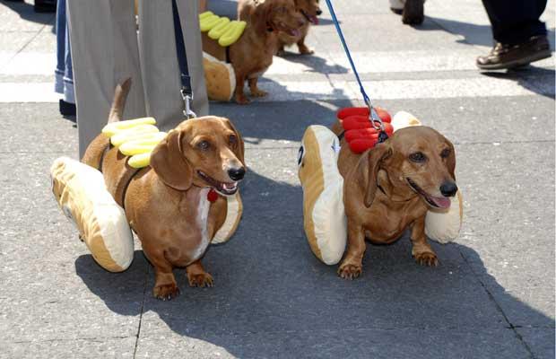 Cães dachshunds são 'fantasiados' de cachorro-quentes para promover a festa Oktoberfest Zinzinnati, em Cincinnati, no estado americano de Ohio. O festival inclui uma semana de atividades, que começam com a tradicional corrida dos cachorro quentes, disputada por dachshunds 'a caráter' (Foto: AP Photo/Cincinnati USA Regional Chamber)