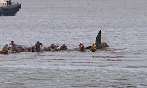 Filhote de baleia preso na lama na praia de Immingham Docks. (Foto: BBC)
