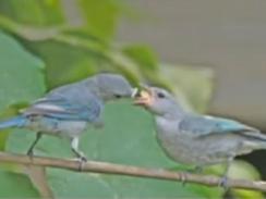 Fotografia de Pedro Cavalcante, servidor da Câmara que registra pássaros do cerrado (Foto: Reprodução/ TV Globo)