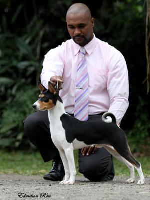 Criador chega a vender cães basenji por até 3 mil euros  (Foto: Edmilson Reis/Canil Itapuca/Divulgação)