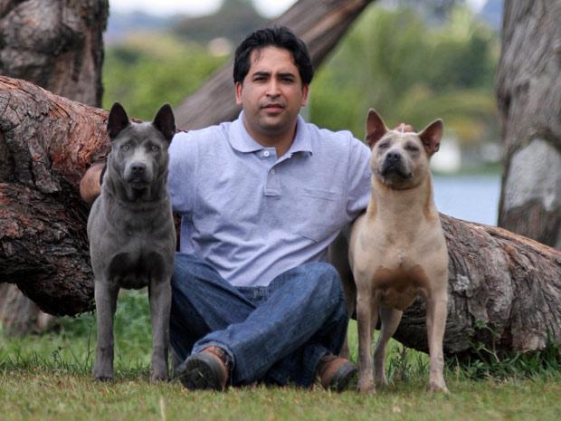 Criador Hebhert Freitas com os cães da raça Thai Ridgeback  (Foto: Edmilson Reis/Canil Blue Face Brazil/Divulgação)