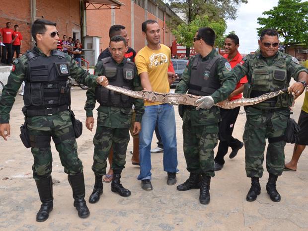 Cobra é capturada em depósito de João Pessoa (Foto: Walter Paparazzo/G1)