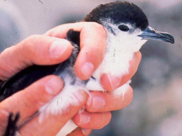 pássaro (Foto: Divulgação/Reginald David/Smithsonian)