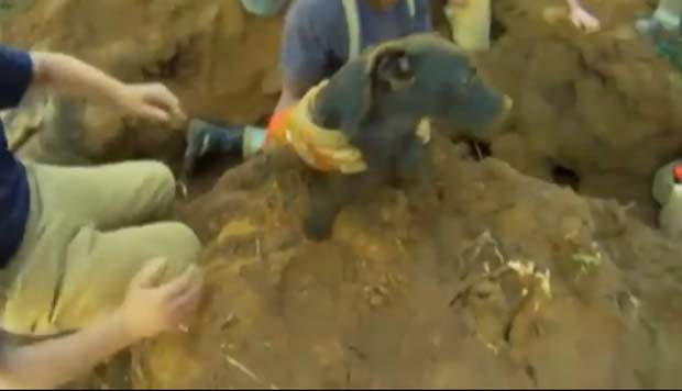 Em março de 2011, Um cão foi resgatado em Shrewsbury, no Reino Unido, após ficar nove horas preso em uma toca de coelho a 1,5 metro de profundidade. O cachorro ficou entalado na toca após perseguir um coelho. (Foto: Reprodução)