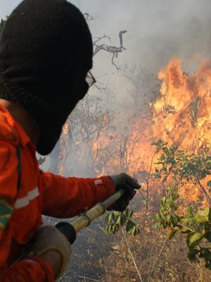 Bombeiros combatem incêndio no Jardim Botânico. (Foto: Vianey Bentes/TV Globo)