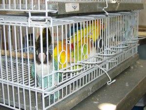 Homem é multado em R$ 332 mil por criar aves exóticas em MS (Foto: Divulgação/Decat)