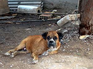 cachorro ataca criança (Foto: Leandra Ribeiro/G1)
