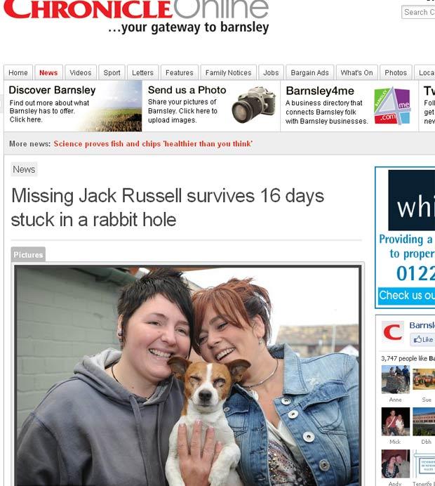 Cão da raça Jack Russell ficou 16 dias preso em uma toca de  coelho. (Foto: Reprodução)