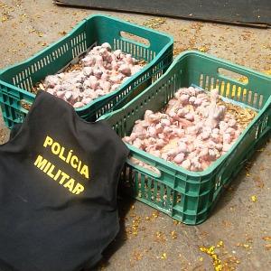 Suspeito de tráfico de animais é preso com 141 filhotes de papagaio em MS (Foto: Marcos Donzeli/Nova Notícias)
