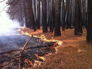 As folhagem seca facilita a propagação do fogo.   (Foto: Káthia Mello/G1)