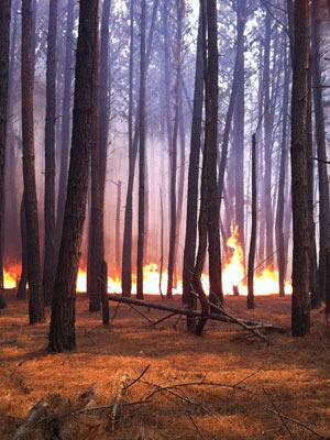 Chamas consomem floresta de pinheiros na Floresta Nacional neste domingo(11) (Foto: Káthia Mello/G1)