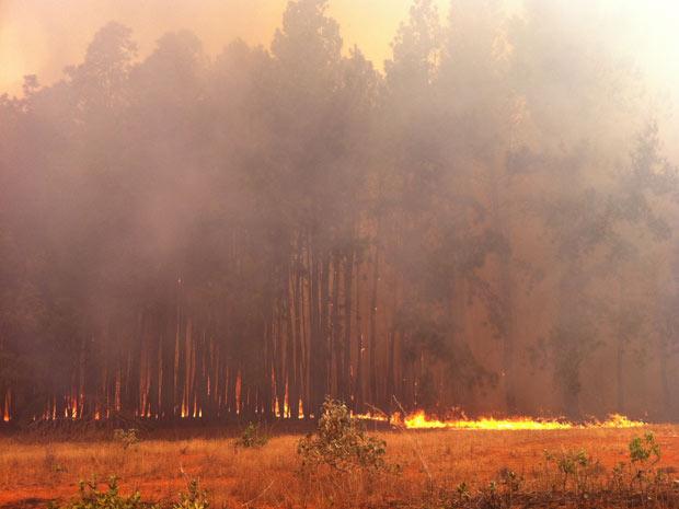 Incêndio de grandes proporções consome área de reflorestamento na Floresta Nacional de Brasília neste domingo(11). (Foto: Káthia Mello/G1) (Foto: Káthia Mello/G1)