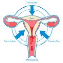 Metade das mulheres sente dor em alguma fase da vida (Arte/G1)