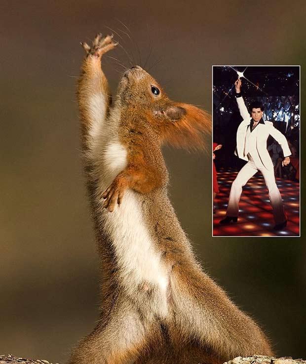 Em 2010, o fotógrafo polonês Marek Paluch flagrou um esquilo fazendo movimentos que lembram o filme 'Os Embalos de Sábado à Noite', mais precisamente o personagem de John Travolta. (Foto: Reprodução)