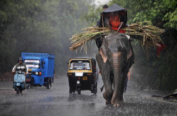 Um elefante foi flagrado dividindo espaço com veículos em uma estrada em Jammu, na Índia, nesta quinta-feira (15). (Foto: Channi Anand/AP)