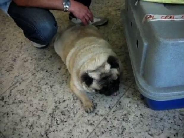 Dono diz que cachorro morreu após 10 horas de voo (Foto: Arquivo Pessoal)