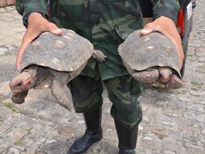 Jabuti é devolvido à Polícia Ambiental (Foto: Walter Paparazzo/ G1PB)