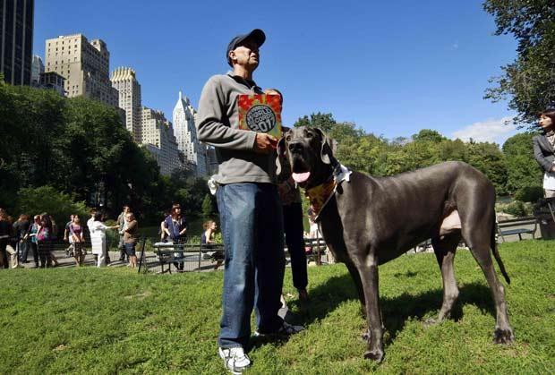 Com 1,092 metro, cão chamado 'Giant George' é considerado o maior do mundo. (Foto: Eduardo Munoz/Reuters)