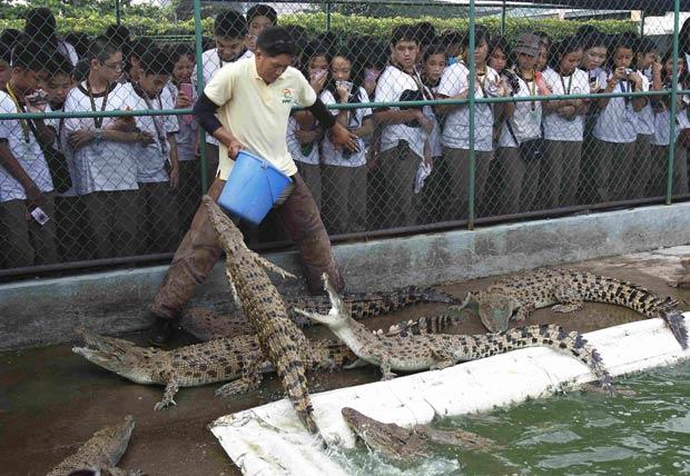 Um tratador foi 'encurralado' por pequenos crocodilos durante a alimentação dos répteis em uma fazenda de crocodilos em Manila, nas Filipinas. (Foto: Romeo Ranoco/Reuters)