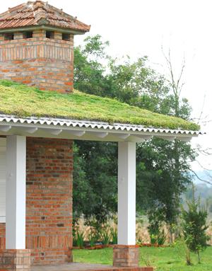 Telhado verde (Foto: Divulgação/Ecotelhado )