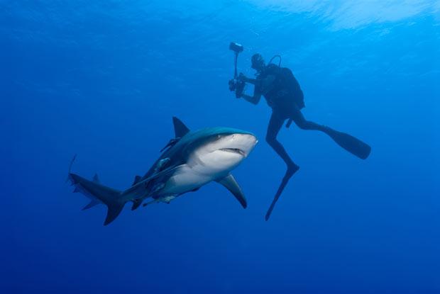 Fiona Ayerst ficou poucos metros de tubarões-cabeça-chata na costa de Moçambique. (Foto: Stephan Brits/Barcroft Media/Getty Images)