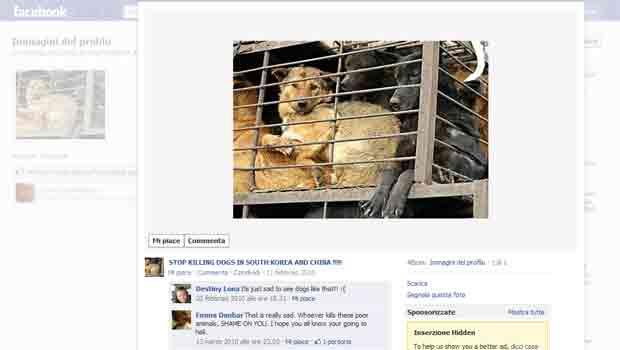 Página no Facebook faz campanha contra a morte de cães (Foto: Reprodução)
