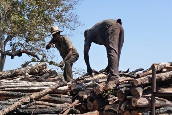Trabalhadores sem equipamentos de proteção nas carvoarias. (Foto: Divulgação/SRTE-GO)