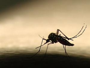 Número de casos de dengue no Ceará é recorde. (Foto: Arquivo G1)