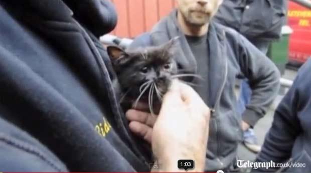 Felino foi resgatado com segurança pelos bombeiros. (Foto: Reprodução/Telegraph)