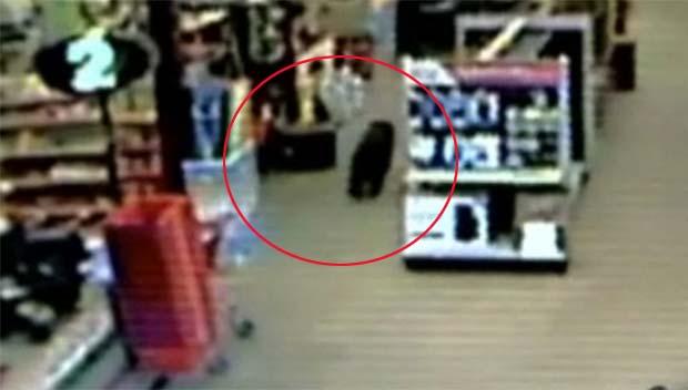 Urso foi flagrado pelas câmeras de segurança da loja. (Foto: Reprodução)