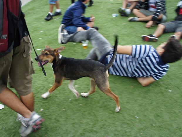 Cachorro 'invadiu' a Cidade do Rock na tarde deste sábado (24), antes do início dos shows no Palco Mundo (Foto: Glauco Araújo/G1)