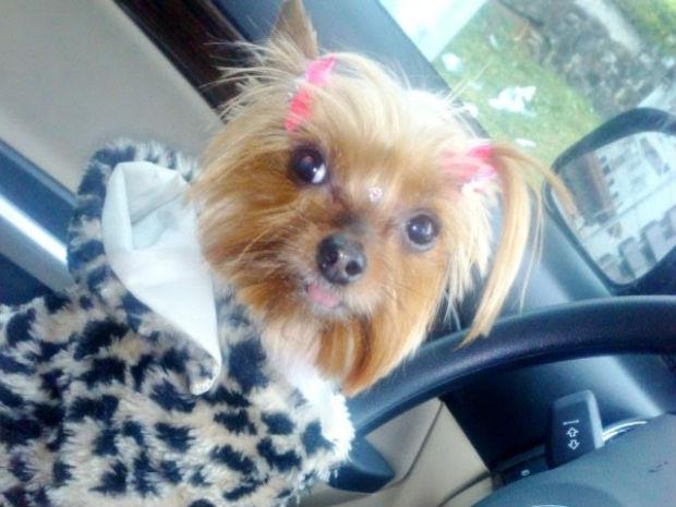 Mia morreu após ser agredida na cabeça por funcionário de pet shop (Foto: Divulgação)