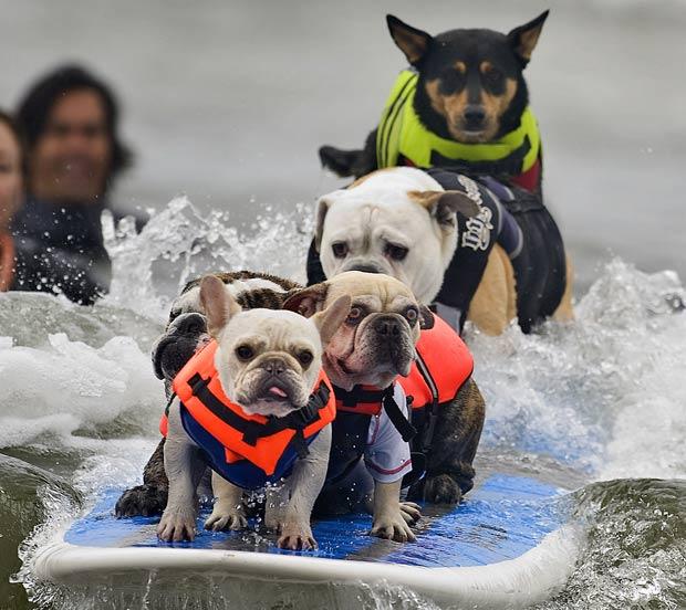Seis cães surfaram na mesma prancha, mas não conseguiram recorde. (Foto: Reed Saxon/AP)