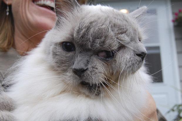 Um gato que nasceu com uma raríssima condição conhecida como 'Janus', com duas faces, entrou para o livro Guiness dos recordes ao completar 12 anos esta semana. Ele é o felino 'Janus' mais velho já registrado. Os gatos nascidos com essa condição geralmente têm a vida muito breve, de apenas alguns dias. (Foto: Reuters/David Niles)
