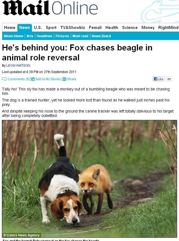 Cão foi flagrado sendo seguido por raposa. (Foto: Reprodução)