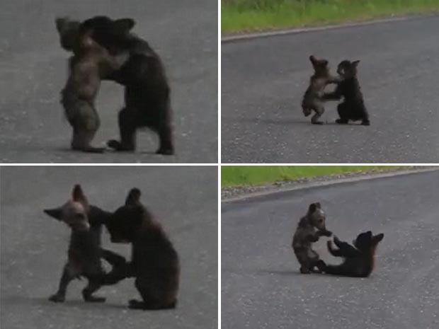 Filhotes de urso foram vistos 'lutando' no meio de uma estrada. (Foto: Reprodução/YouTube)
