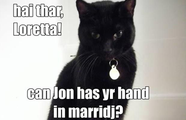 Foto de gato que foi usada em um pedido de casamento (Foto: Reprodução)