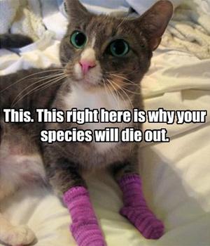 """""""Isso. Isso aqui na minha pata é a razão pela qual sua espécie será extinta"""" (Foto: Reprodução)"""
