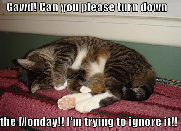 """""""Você pode desligar essa segunda-feira? Estou tentando ignorá-la"""", diz a legenda (Foto: Reprodução)"""