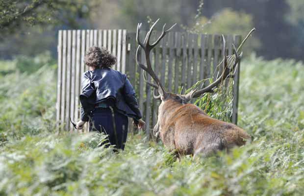 Várias pessoas se reuniram no parque para assistir aos animais naquela tarde (Foto: Robert Piper/Caters News)