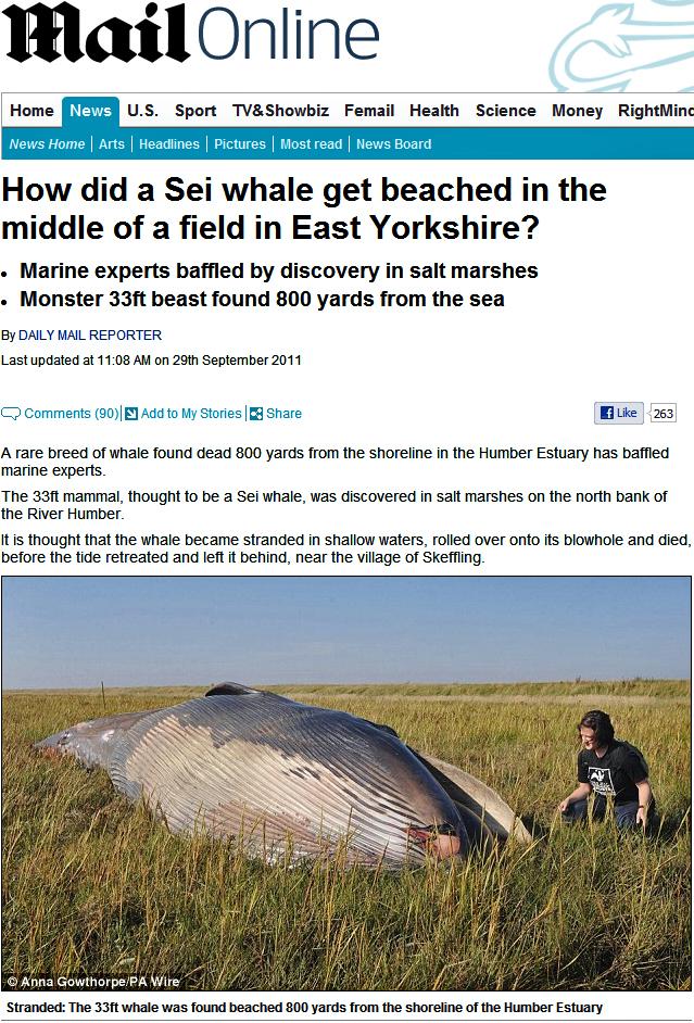 Baleia-de-minke foi encontrada a quase um quilômetro de distância do mar no Reino Unido. Uma maré excepcionalmente alta pode ter levado o animal para esta região, mas quando as águas retrocederam, ele ficou encalhado e morreu (Foto: Reprodução)
