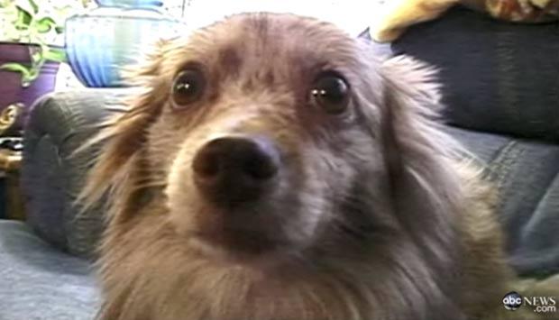 Cão não ficou ferido. (Foto: Reprodução/ABC News)