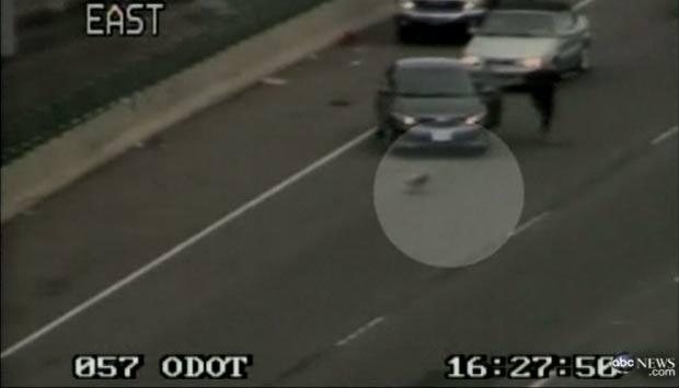 Cão invadiu rodovia no estado do Oregon. (Foto:  Reprodução/ABC News)