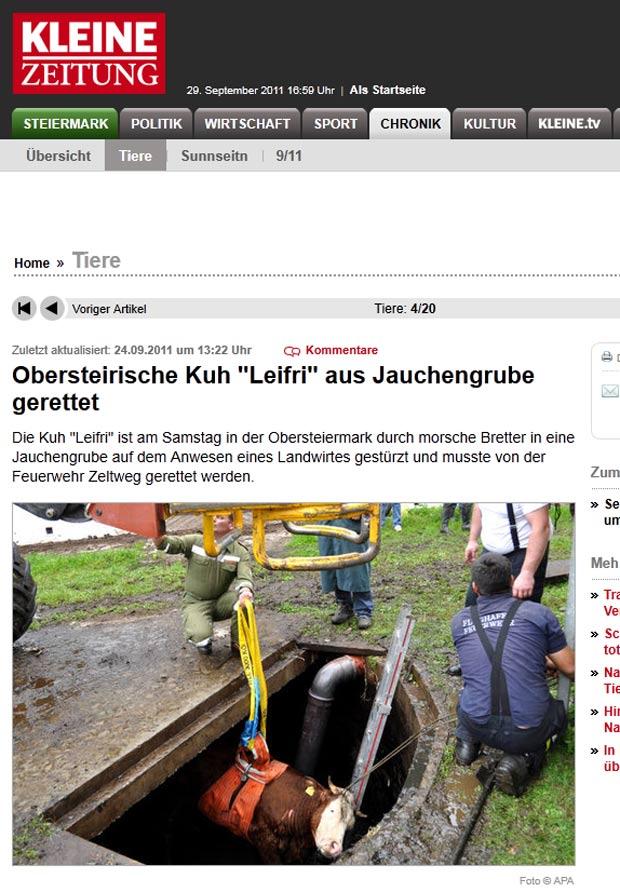 Vaca foi resgatada após cair em poço. (Foto: Reprodução/Keine Zeitung)