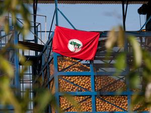 Bandeira do MST indica ocupação da fazenda da empresa Cutrale, em SP, em agosto. (Foto: Mario Ângelo/Sigmapress/AE)