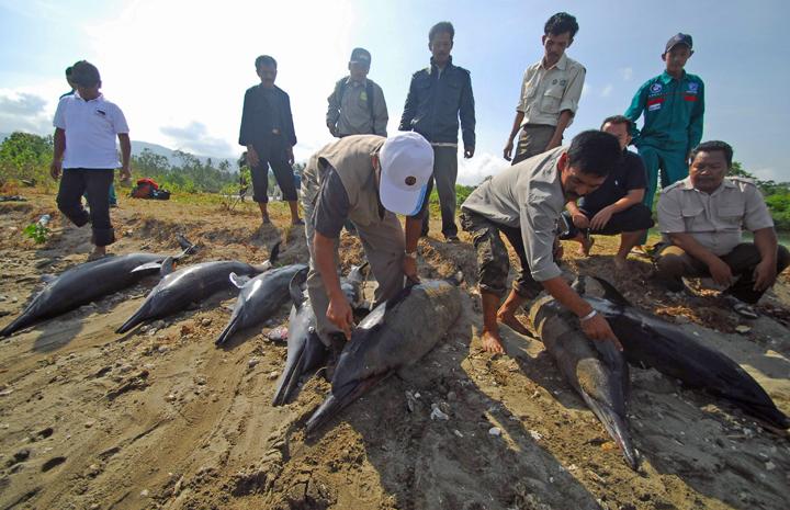 golfinhos mortos (Foto: Stringer/Reuters)