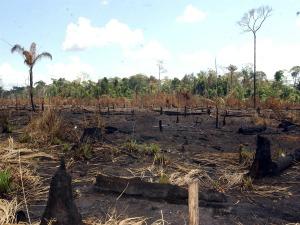 Desmatamento na Amazônia apresenta redução (Foto: Marcello Casal Jr/ABr)