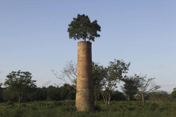Árvore foi flagrada no topo de chaminé no Paraguai. (Foto: Jorge Saenz/AP)