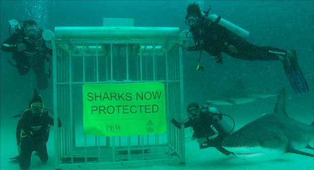 Medidas restringem ação de pescadores na região. (Foto: Stuart Cove's Dive Bahamas / via BBC)