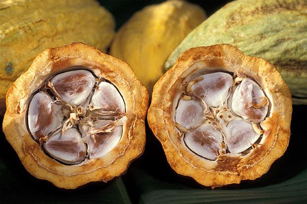 Fruto de cacau, com os grãos usados para fazer o chocolate em seu interior. (Foto: USDA/Divulgação)